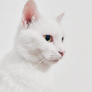 adorable-animal-animal-photography-1485968.jpg